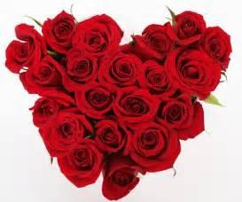 imagenes de rosas rojas para una madre colores de las rosas mas bonitas para regalar a mam 225