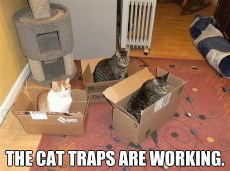 Cat Trap Meme - the cat traps are working