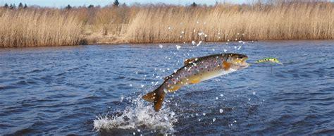 pesci da cucinare how to cucinare il pesce d acqua dolce agrodolce