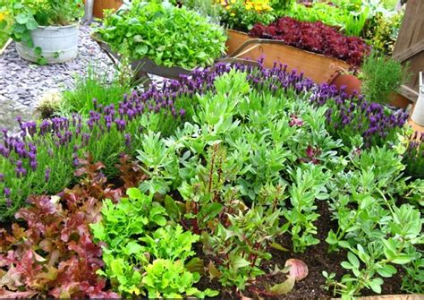Backyard Gardening For Beginners by 10 Tips To Starting A Vegetable Garden For Beginners The