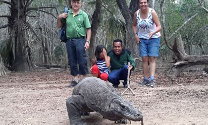 komodo island  flores overland boat charters