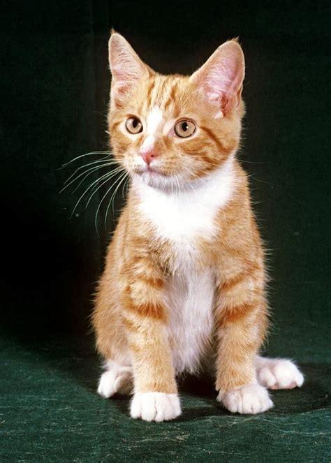 Orange Tabby Kitten Photograph by Larry Allan
