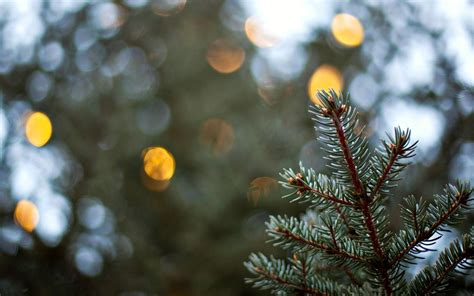 tree bokeh photo collection tree bokeh wallpapers