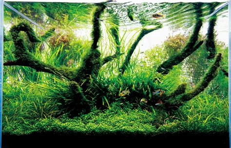 Aquascape Ada by Seahorse Aquariums Now Suppling Ada In Ireland