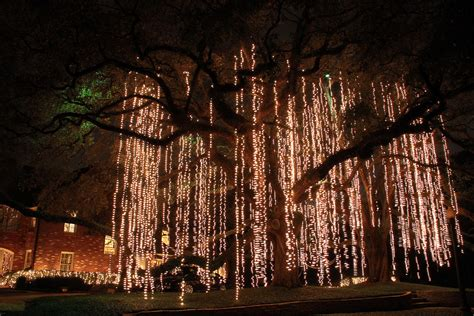 christmas light spanish moss christmas lights hanging