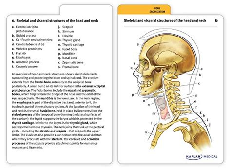 anatomy coloring book by mosby anatomy flashcards toolfanatic
