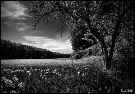 Landscape Photos Black And White Images Black And White Landscape