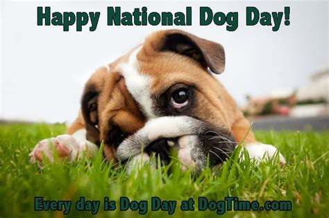happy national puppy day happy national day from dogtime dogtime