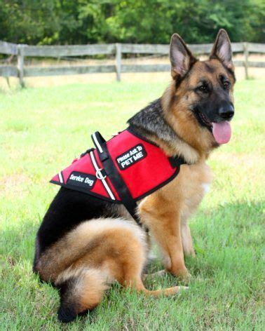 puppy finder rescue 195 best search and rescue dogs images on service dogs working