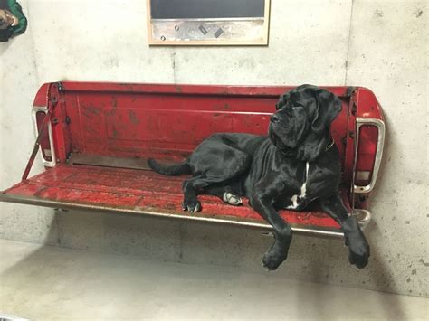 truck bed bench seat big ernie on ford tailgate bench diy home decor
