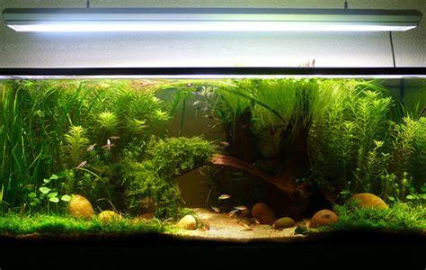 installation 6 9 quels d 233 cors pour un aquarium d eau douce aquagenome