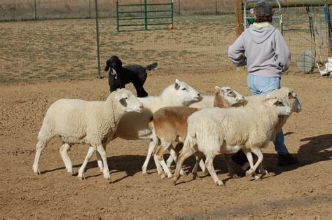how to a herding opinions on herding