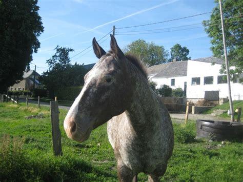 les participations de vanita au forum du cheval