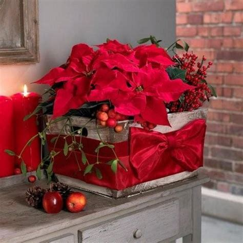 decorating with poinsettias decorate with 45 ideas poinsettias the holidays