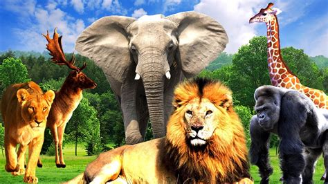 Who Is Responsible When Wild Animals Attack? - Corless ... Groupings Of Animals