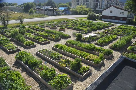 community garden projects  tips forgardening