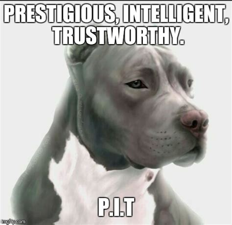 Pitbull Meme - pitbull memes 28 images memes are not dangerous pit