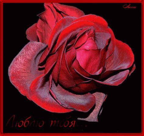 imagenes bellas de amor con brillo un paquete completo de rosas con brillo im 225 genes de amor