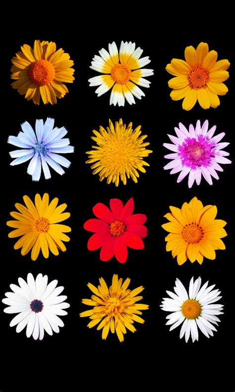imagenes flores para whatsapp fondos para whatsapp patada de caballo flores fondos