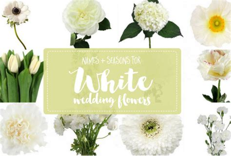 White Wedding Flower Pictures by White Flowers Names Www Pixshark Images Galleries