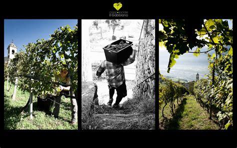 il gabbiano cooperativa cooperativa sociale quot il gabbiano quot i vini