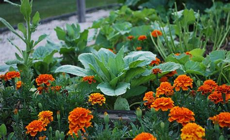 Most Common Garden Planning Mistakes And The Smart Ways To Common Garden Vegetables