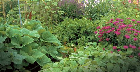 Companion Planting The Tennessee Magazine Companion Flowers For Vegetable Garden