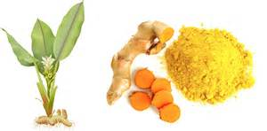 The history of turmeric and its numerous benefits