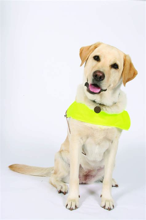 guide dogs for the blind guide dogs awareness day liverpool events liverpool towntalk