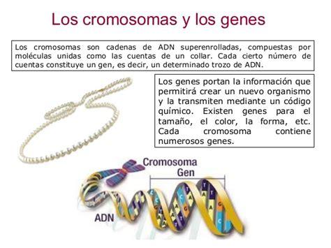 web imágenes iniciar sesión los cromosomas y genes