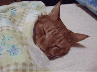 sleepy gif sleepy cat gif by cheezburger find on giphy