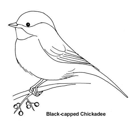 chickadee paintings bing images coloring pages
