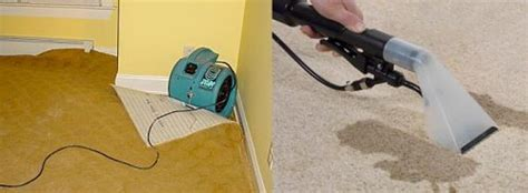 Carpet And Upholstery Cleaning Melbourne by Carpet Cleaning And Drying Melbourne Deluxe Carpet Steam Cleaning Melbourne