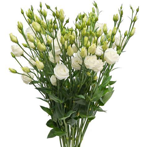 bunga terindah  dunia wanita