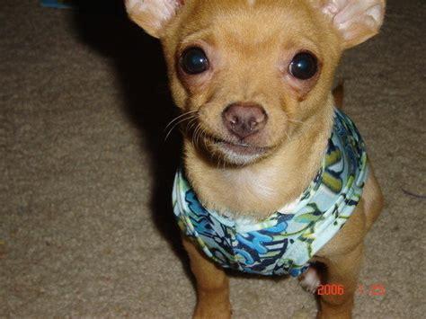 craigslist las vegas dogs petition 183 ban the sale and trade of animals on craigslist las vegas 183 change org