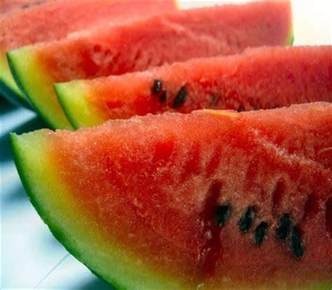 can my eat watermelon german shepards can my german shepherd eat watermelon