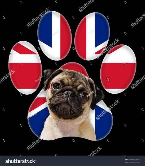 pug paw problems pug portrait with a background of britain flag in paw print stock photo 63109969