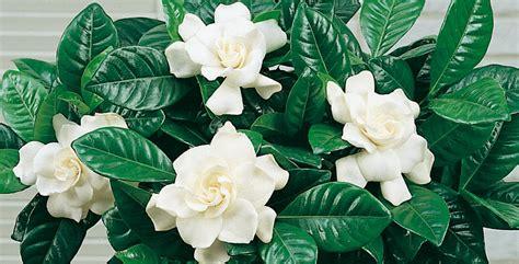 piante interno poca luce piante da interno come scegliere la luce giusta