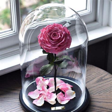 forever in glass dome forever in glass dome and the beast forever glass dome medium 20cm and the