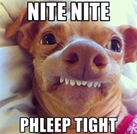Funny Goodnight Memes - nite nite phleep tight funny picss