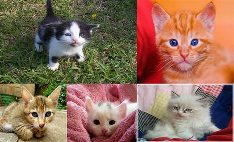 Pictures of baby kittens   newborn kittens   The Cutest