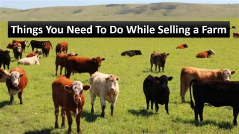 Do You Want To A Farmer From Lubbock 2 by Things You Need To Do While Selling A Farm Things You Need