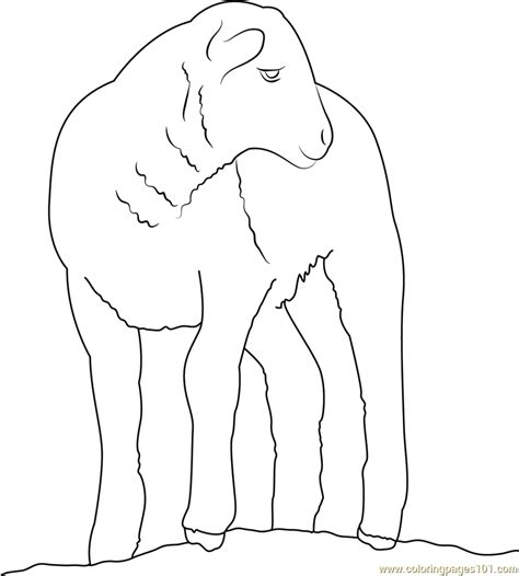 baby sheep coloring page free sheep coloring pages
