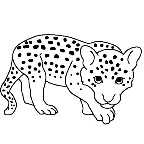 cute leopard coloring pages baby snow leopard coloring pages batch coloring ghost