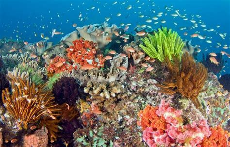 indonesias coral reef nature pictures wallpaper hd hair