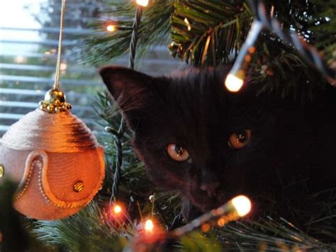 protect christmas tree from cat cats trees animals