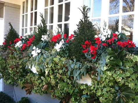 winter plants for window boxes fill your window boxes with evergreen topiaries cyclamen