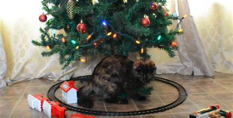 best to keep cats off the xmas tree 28 best cats trees how to keep your cat the tree cathealth