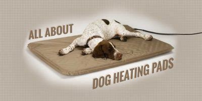 dog house heating pad best dog house heaters vs dog heating pads for winter breeding business