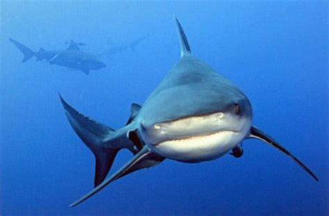 imagenes animales que viven en el agua animales acuaticos